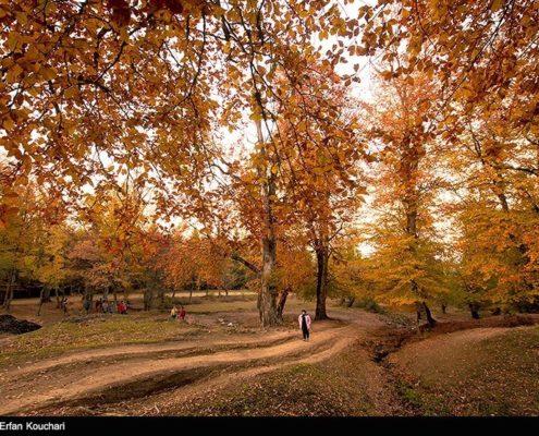 Mazichal forest, Iran