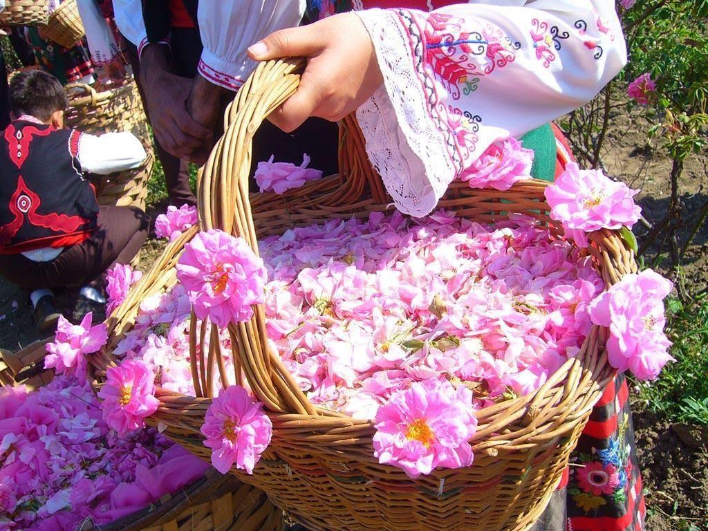Rose Water Festival in Iran