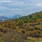 Golestan Forests