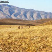 Wild Goats at Golestan National Park