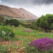 Flora: Juniper