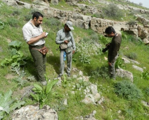 Iran Wildlife Conservation Projects