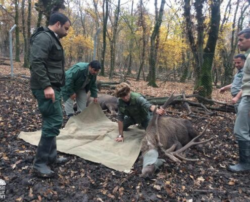 Conservation Project: Red Deer