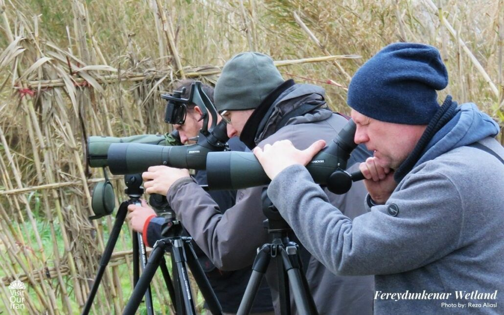 Birdwatching in Fereydunkenar Wetland